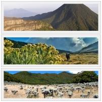 Mt Gede Pangrango